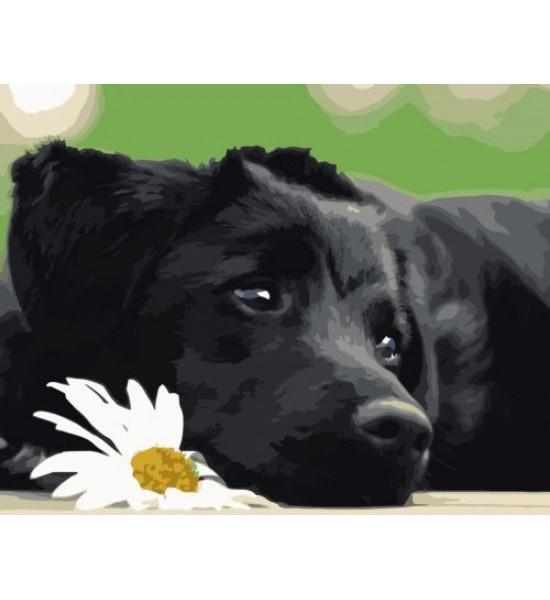 Картина по номерам Чёрный щеночек ★★★ VA-0518